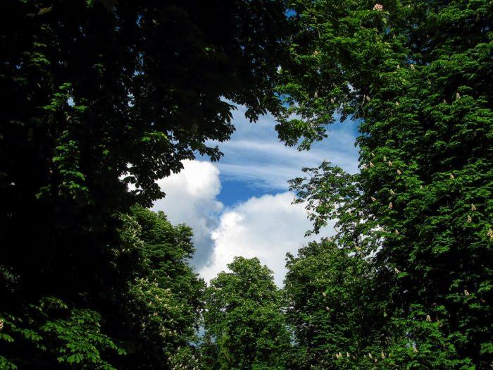 Blick nach oben in den Himmel - durch Baumkronen hindurch_Jiri Rotrekl_pixabay