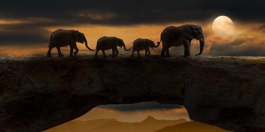 Elefanten marschieren im Mondlicht über eine Felsbrücke, jeweils mit dem Rüssel den Schwanz des vorderen Tieres haltend